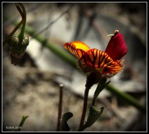flower_32