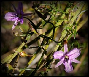 flower_33