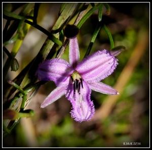 flower_34