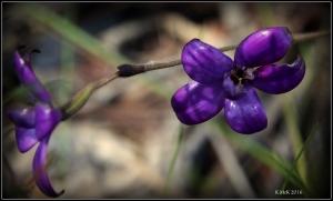 flower_43