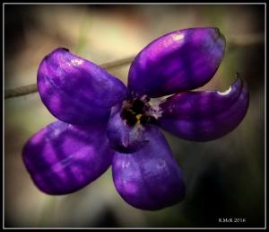 flower_44