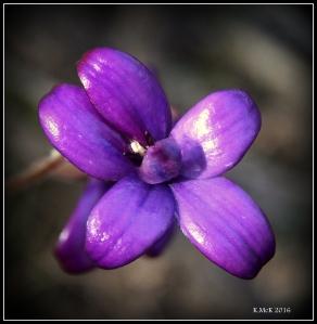 flower_45