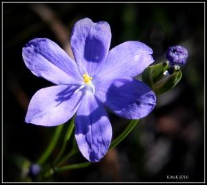 flower_51