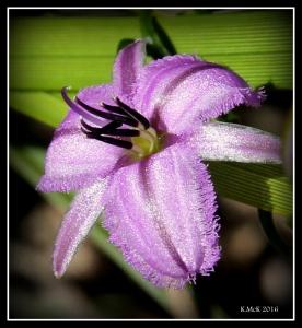 flower_53