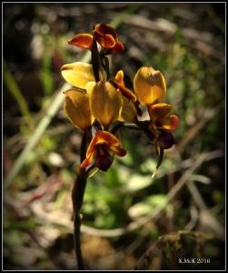 flower_55