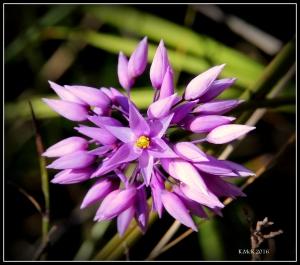 flower_56