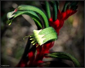 flower_58