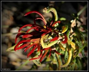 flower_63