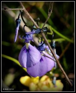 flower_64