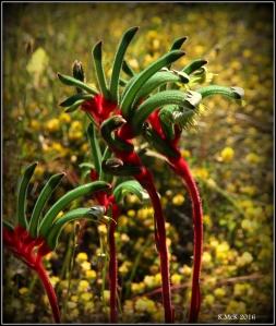 flower_65