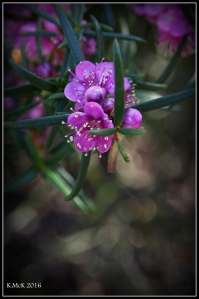 flower_67