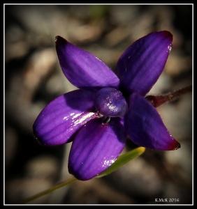 flower_73