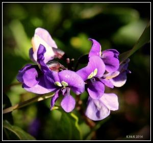 flower_78