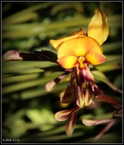 flower_80