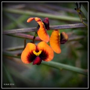 flower_82