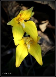 flower_84