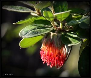 flower_91