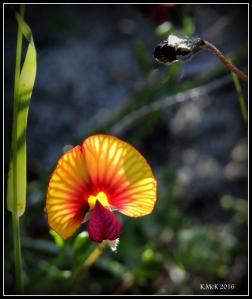 flower_92