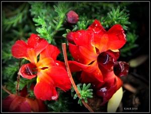 flower_2-9