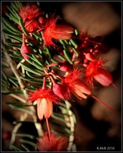 wildflower_10
