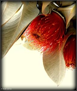 wildflower_11