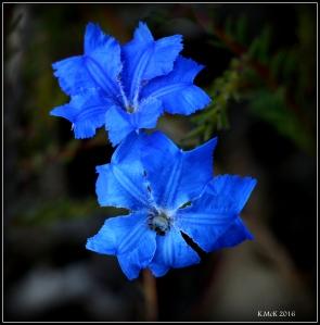 wildflower_12
