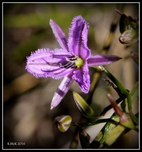wildflower_15