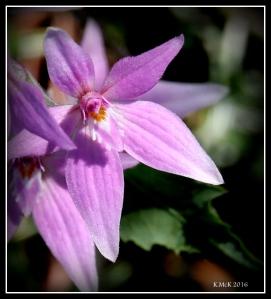 wildflower_17