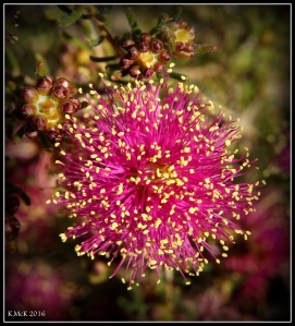 wildflower_18