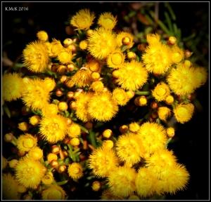 wildflower_19