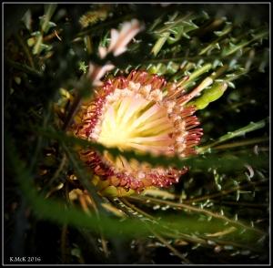 wildflower_20