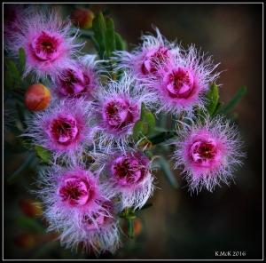 wildflower_24