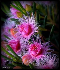 wildflower_25