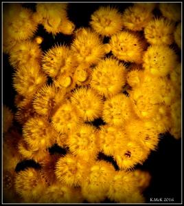 wildflower_26