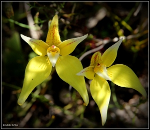 wildflower_29