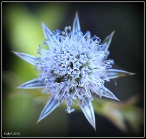 wildflower_3