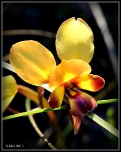 wildflower_30