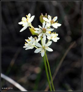wildflower_32