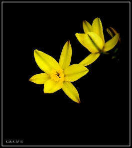 wildflower_34