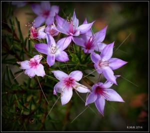 wildflower_35