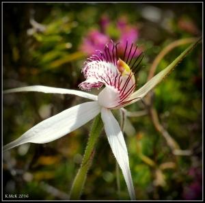 wildflower_36