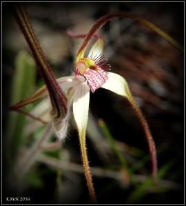 wildflower_38