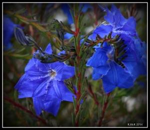 wildflower_39