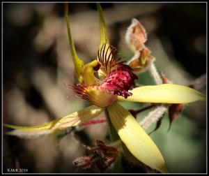 wildflower_40