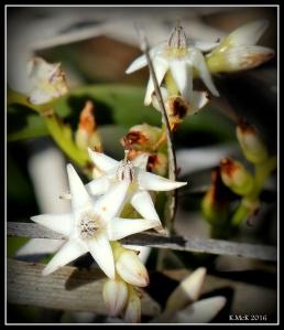 wildflower_42