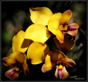 wildflower_43