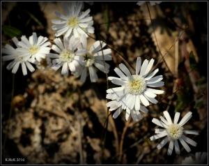 wildflower_44