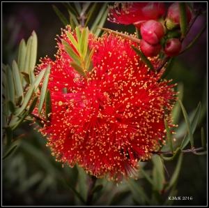 wildflower_46