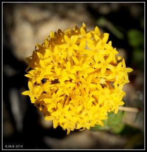 wildflower_48