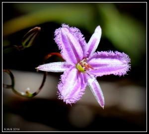 wildflower_49